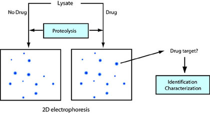 Target identification by pulse proteolysis